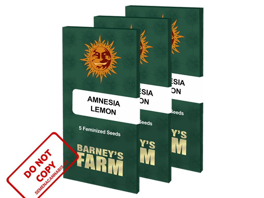 AMNESIA LEMON BARNEYS FARM | SEMENACANNABIS.CZ