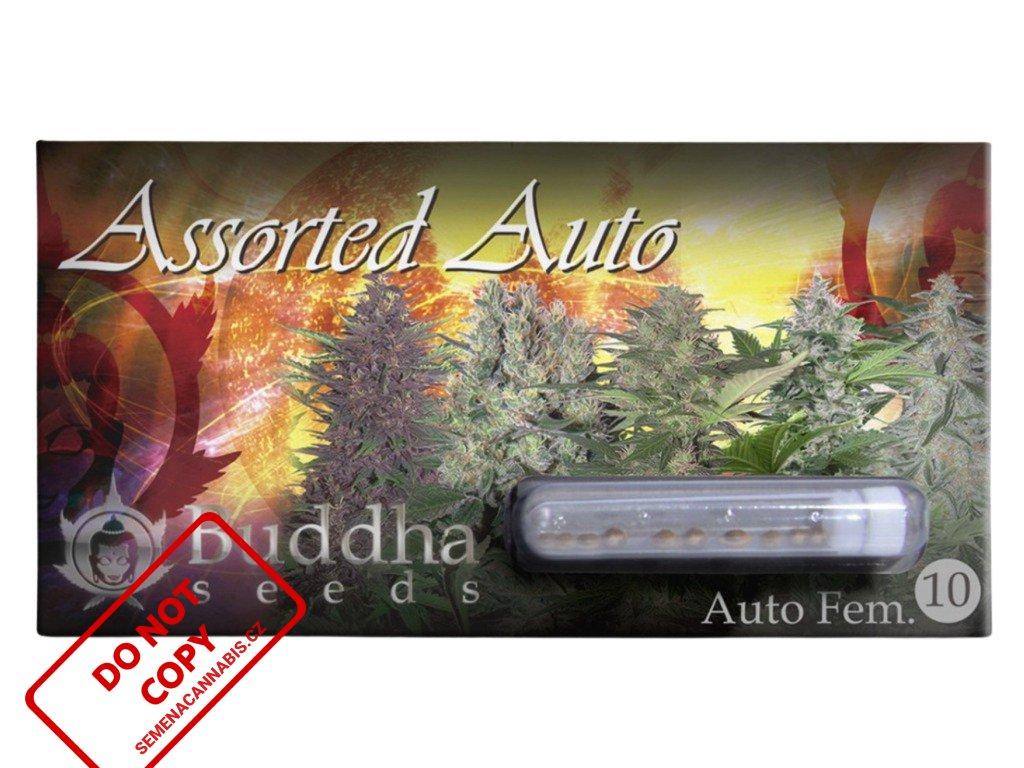 Automix   Buddha Seeds