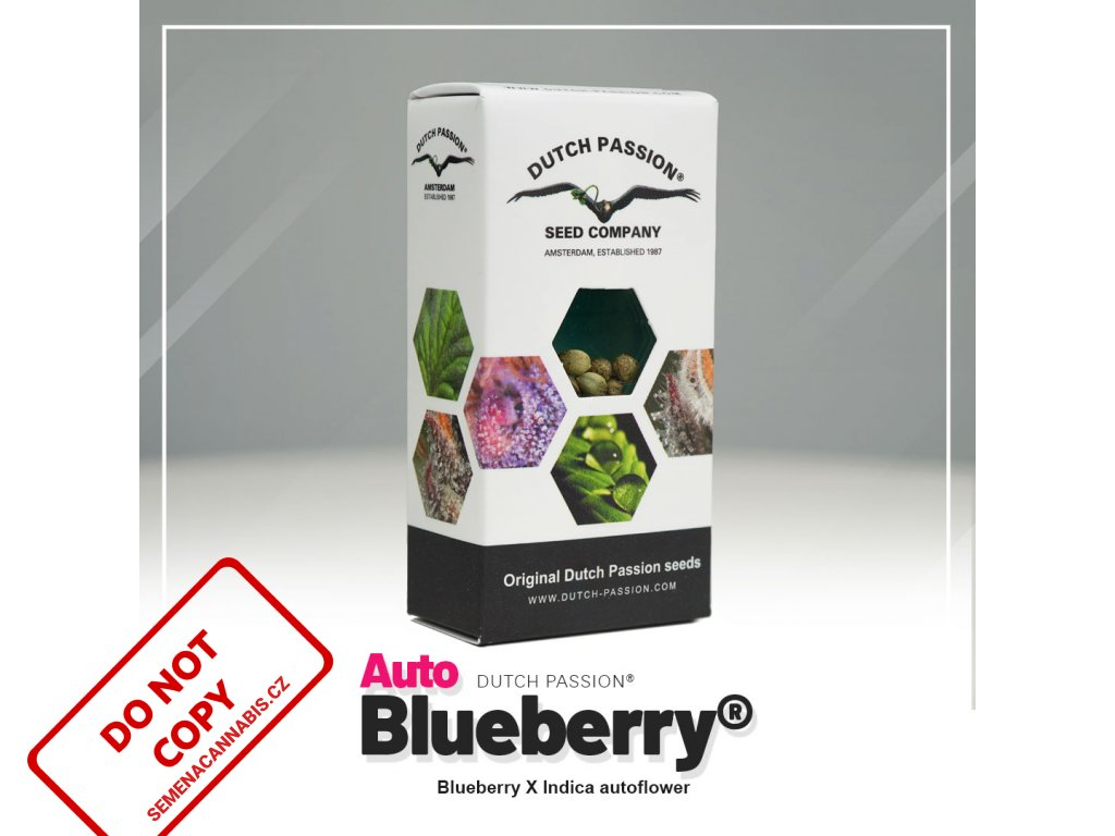 Blueberry AUTO | Dutch Passion