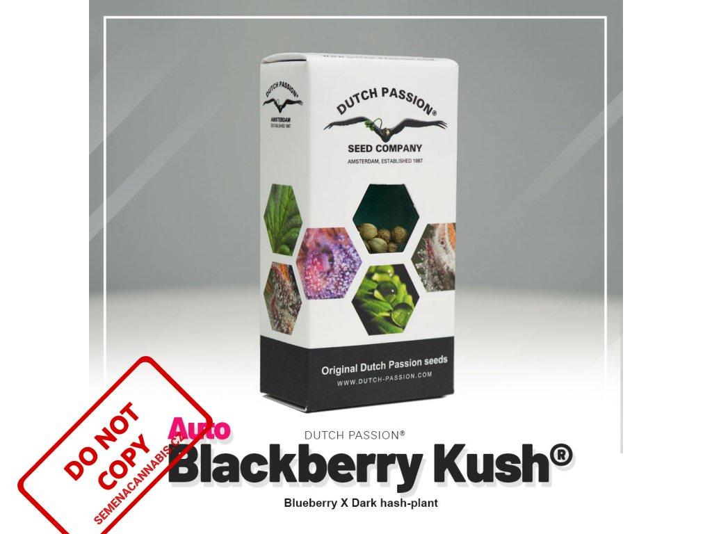 Blackberry Kush AUTO | Dutch Passion