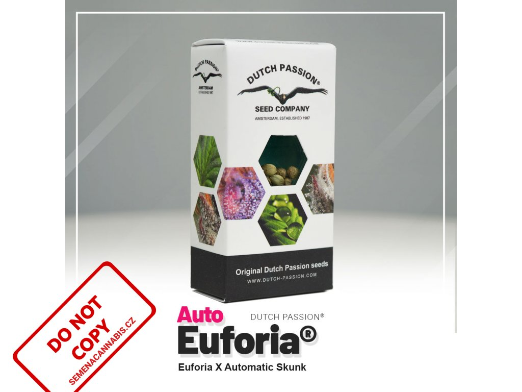 Euforia AUTO | Dutch Passion