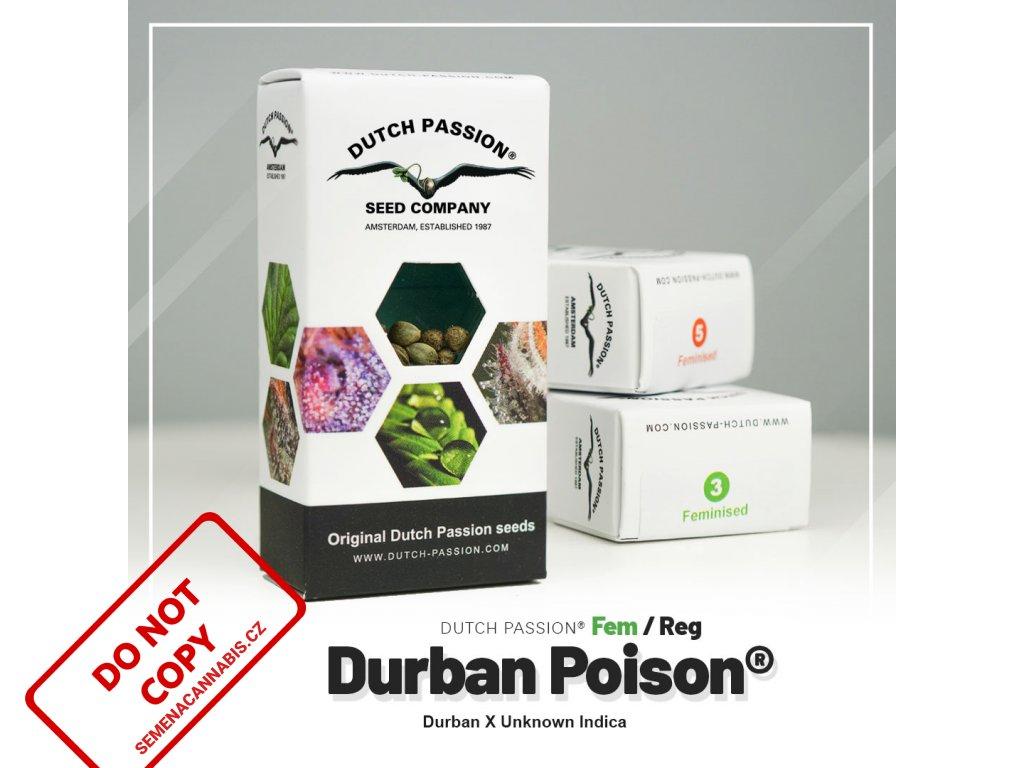 Durban Poison   Dutch Passion