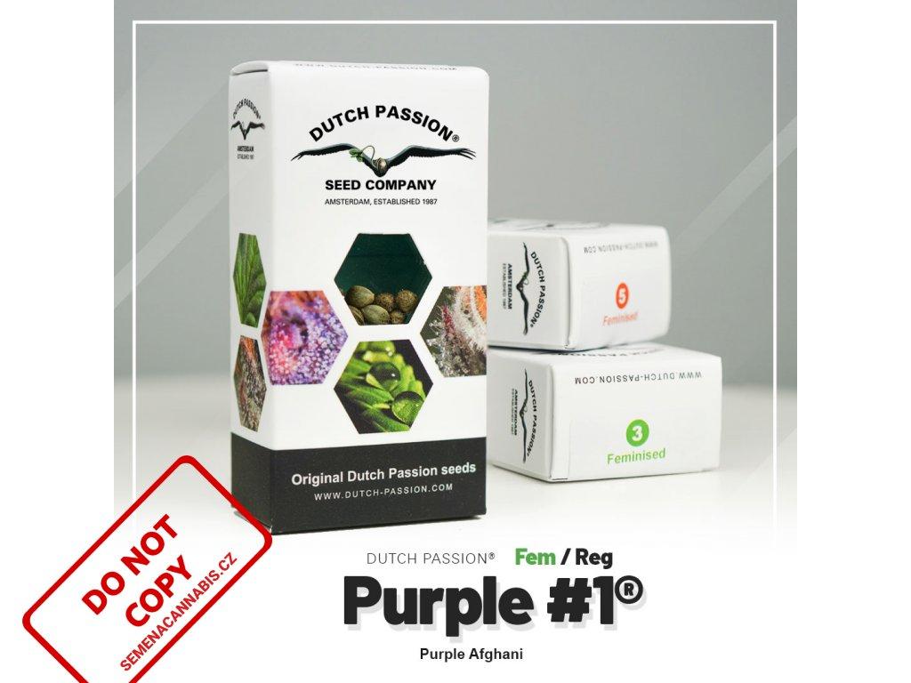 Purple #1   Dutch Passion