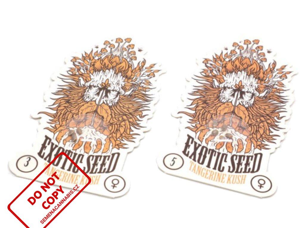 Tangerine Kush   Exotic Seeds