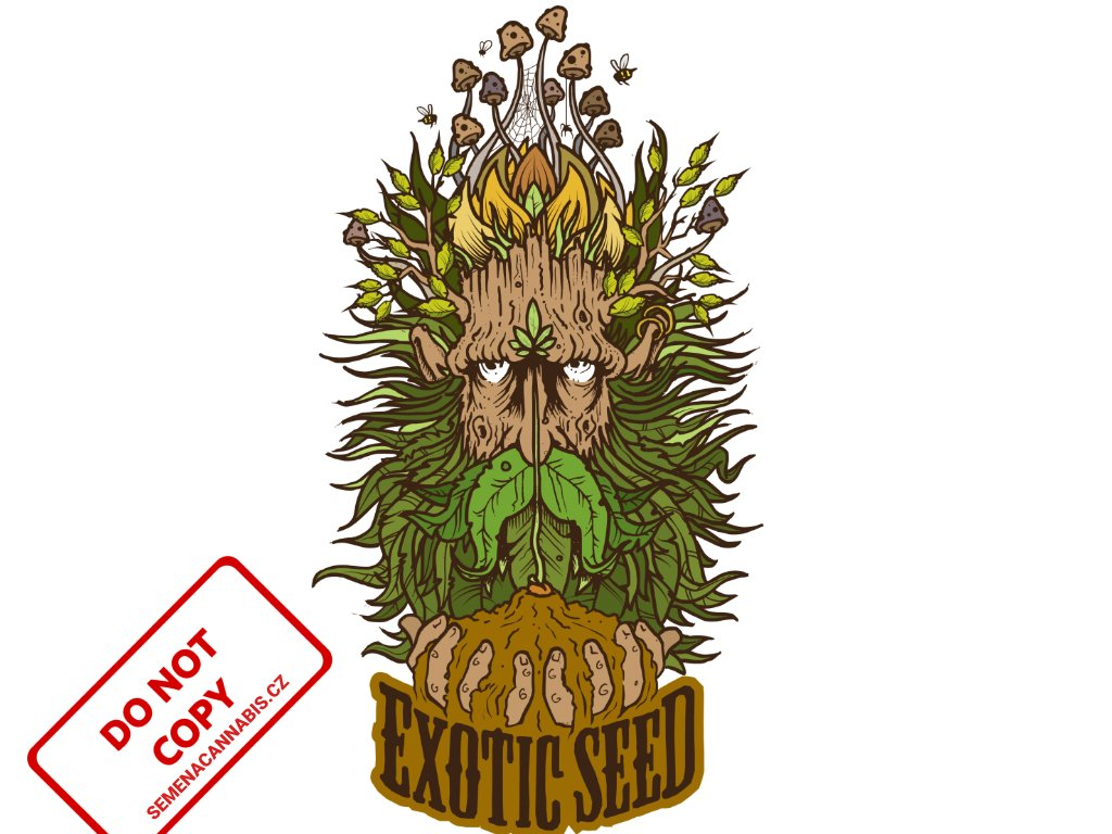 Hippie Therapy CBD (USA)   Exotic Seeds