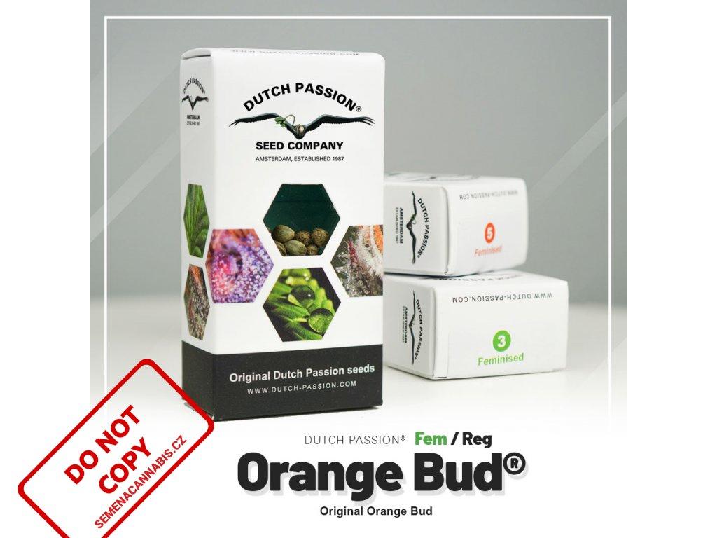 Orange Bud | Dutch Passion