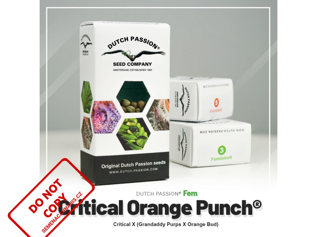 Critical Orange Punch®   Dutch Passion