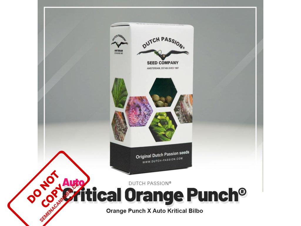 Auto Critical Orange Punch® | Dutch Passion