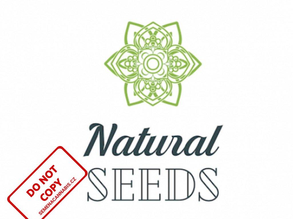 Original Haze #44 Auto | Natural Seeds