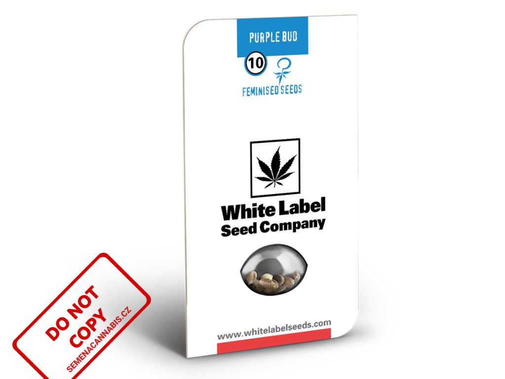 Purple Bud - White Label | Sensi Seeds