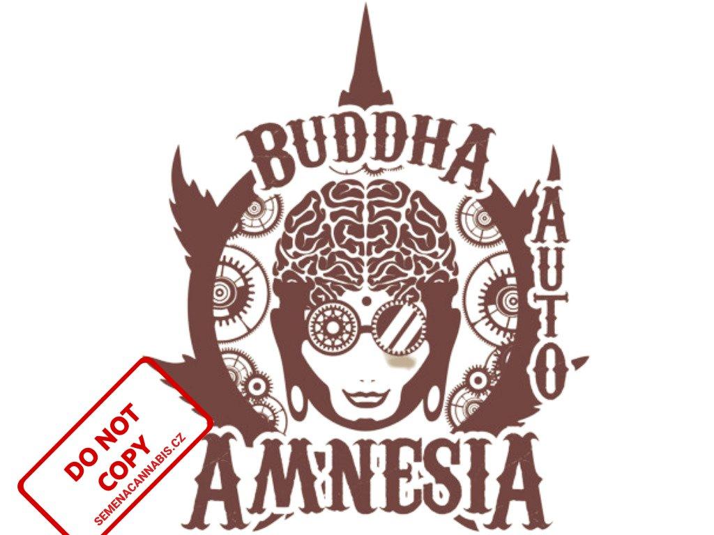 Amnesia AUTO | Buddha Seeds