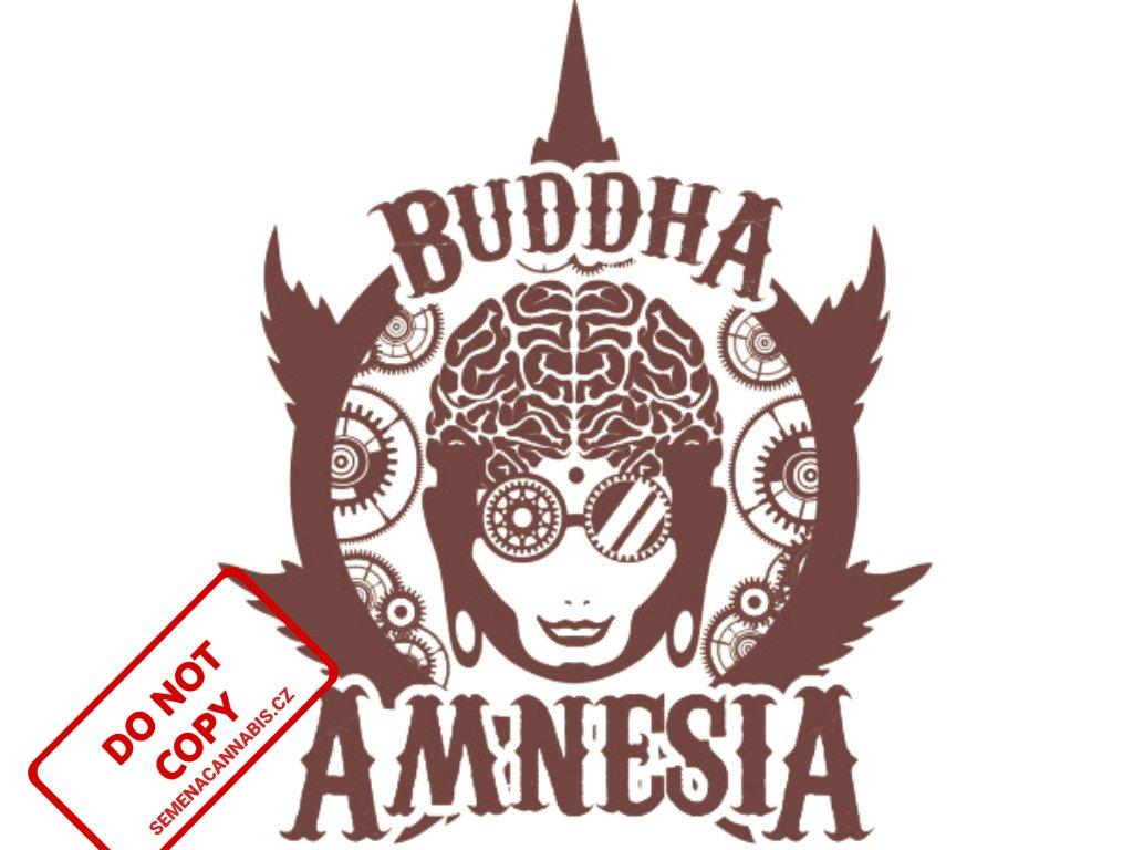 Amnesia | Buddha Seeds