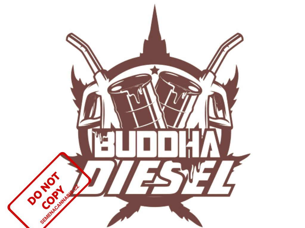 Diesel | Buddha Seeds
