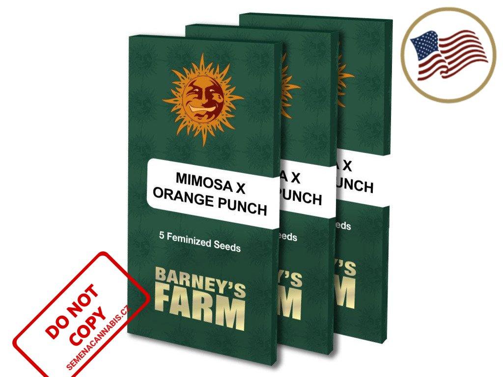Mimosa X Orange Punch™   Barneys Farm