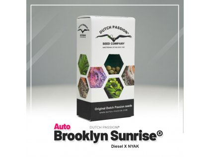 Brooklyn Sunrise AUTO | Dutch Passion