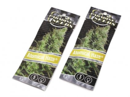 Atomical Haze   Paradise Seeds