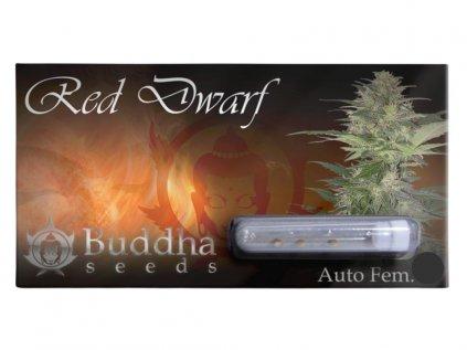 Red Dwarf Auto   Buddha Seeds