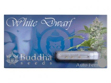 White Dwarf Auto | Buddha Seeds