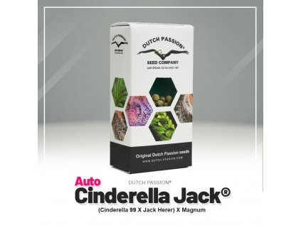 AUTO Cinderella Jack   Dutch Passion
