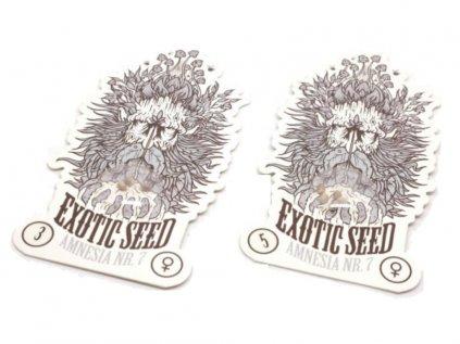 Amnesia #7 | Exotic Seeds