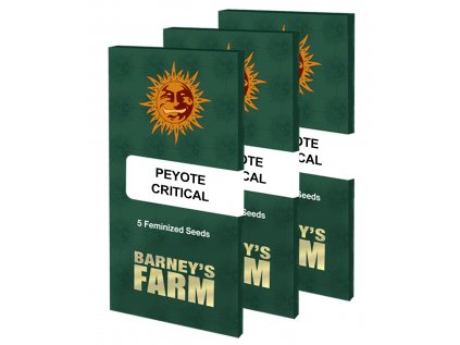 Peyote Critical | Barneys Farm