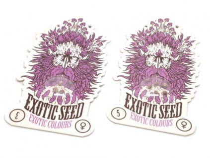 Exotic Colours | Exotic Seeds