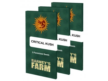 Critical Kush | Barneys Farm