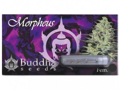 Morpheus CBD | Buddha Seeds