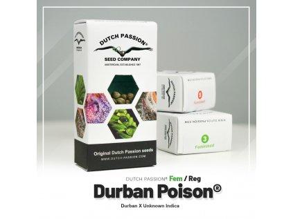 Durban Poison | Dutch Passion