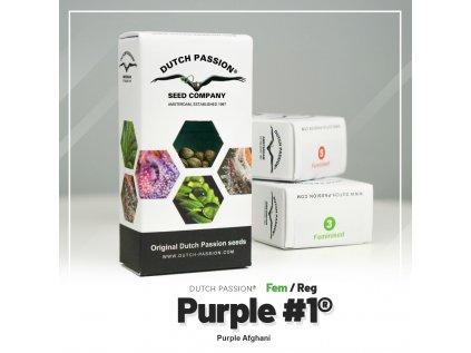 Purple #1 | Dutch Passion