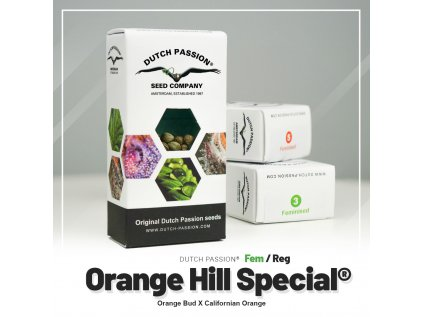 Orange Hill Special® | Dutch Passion
