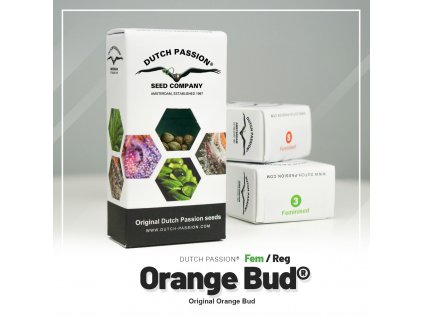 Orange Bud   Dutch Passion