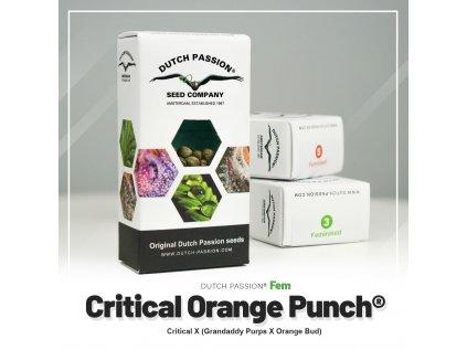 Critical Orange Punch® | Dutch Passion