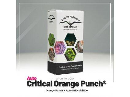 Auto Critical Orange Punch®   Dutch Passion