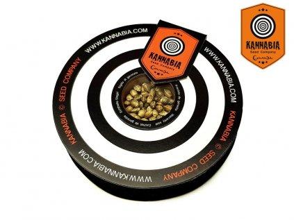 CBD Kama Kush   Kannabia Seeds