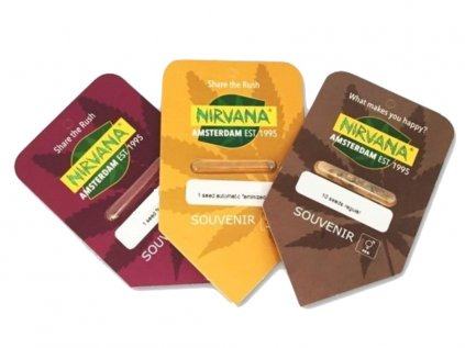 Swiss Cheese | Nirvana Seeds