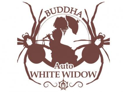 White Widow AUTO | Buddha Seeds