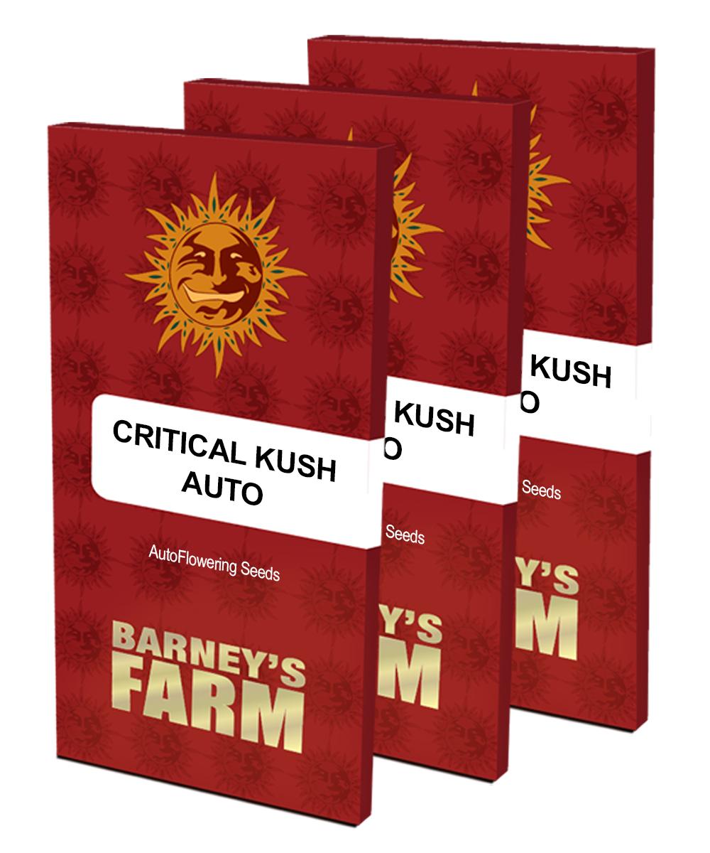 BARNEYS FARM Critical Rapido AUTO Počet ks Feminizované: 10