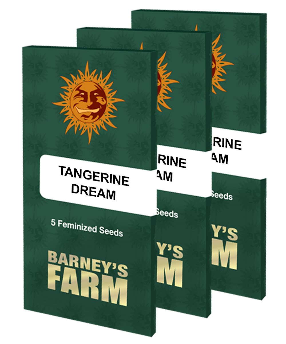 Barneys Farm Tangerine Dream Počet ks Feminizované: 10