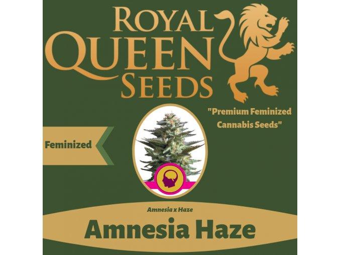 amnesia-haze-royal-queen-seeds-feminizovana-semena-konopi