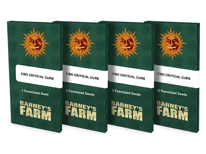 semena konopi cbd critical cure barneys farm posemenucz
