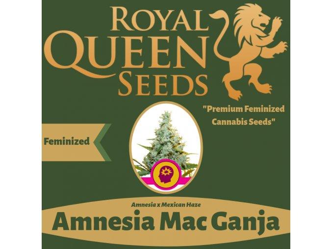 Amnesia Mac Ganja