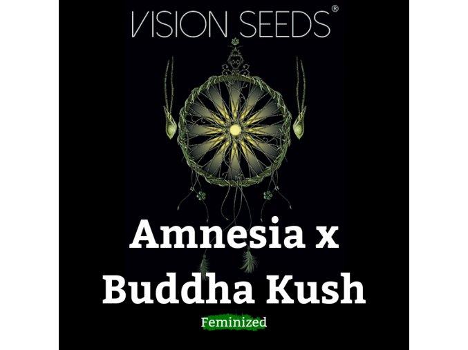 Amnesia x Buddha Kush
