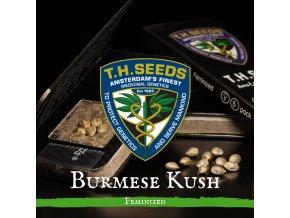 Burmese Kush
