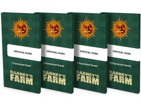 semena konopi critical kush feminized barneys farm posemenucz