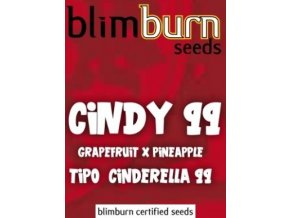 certified blimburn seeds CINDY 99 feminized
