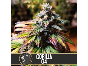 gorilla glue marijuana seeds 1
