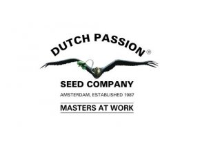 dutch passion 512x270
