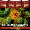blue-mammoth-barneys-farm-autoflower-feminized-semena-konopi