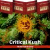 critical-kush-barneys-farm-autoflower-feminized-semena-konopi
